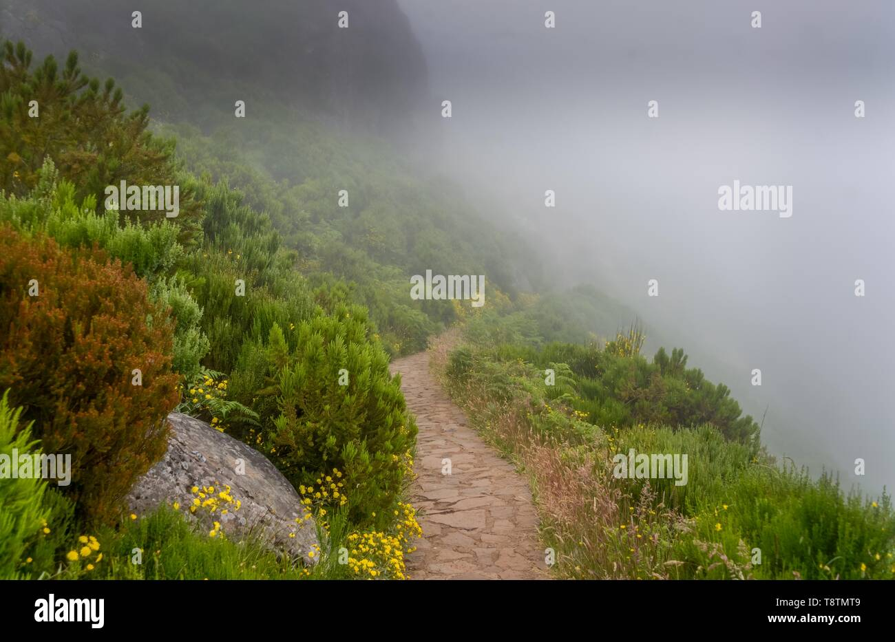 Hiking trail to Pico Ruivo in dense fog, Central Mountains, Madeira, Portugal - Stock Image