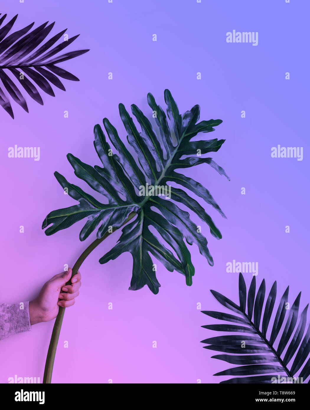 Female holding monstera leaf on in gradient neon background. - Stock Image
