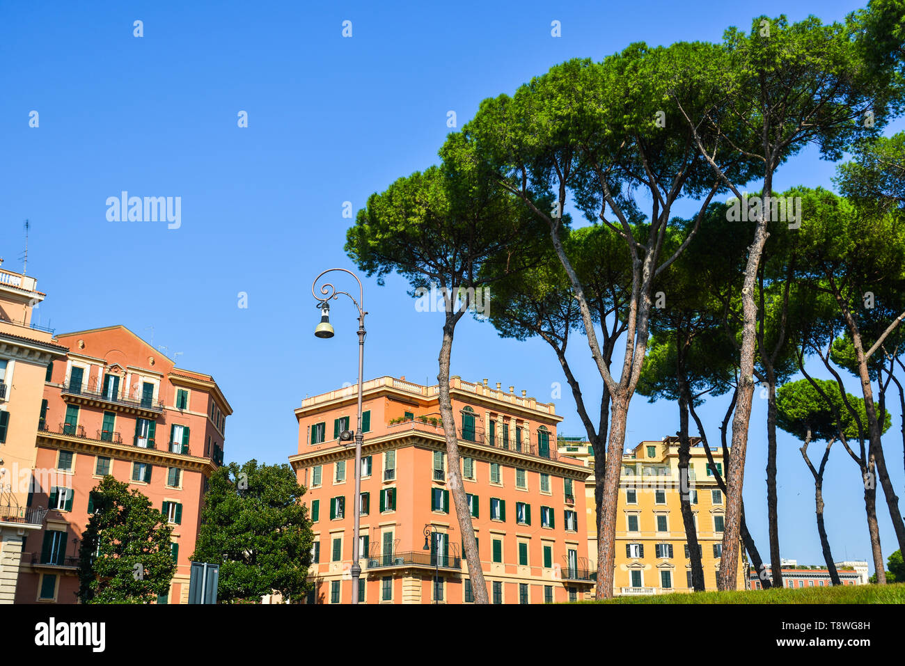 Italian Stone Pines (Pinus Pinea) with ancient buildings at sunny day in Rome, Italy. - Stock Image