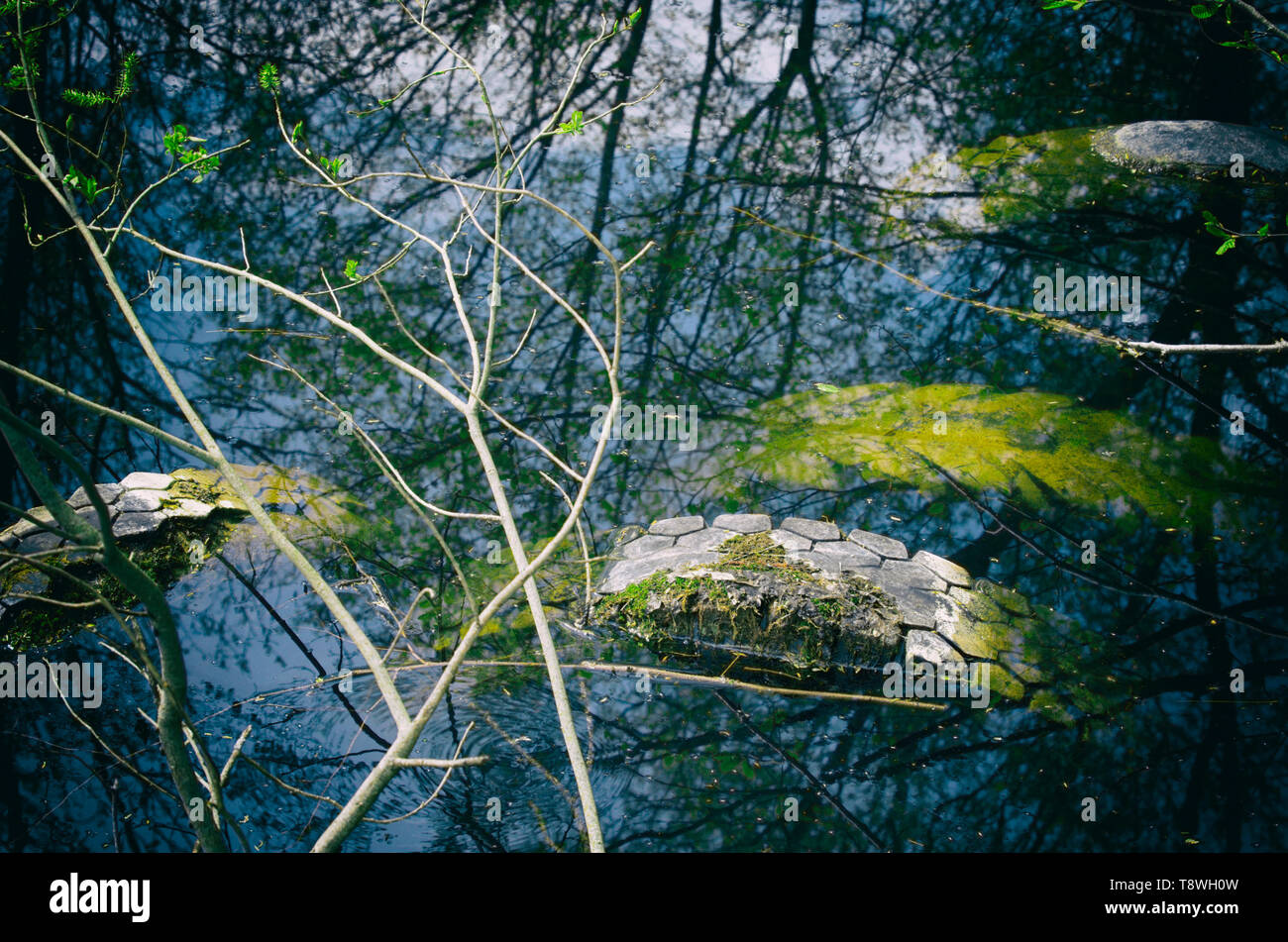 Four used tires, covered with moss and illegally flooded in a forest pond and shrubs reflected in the water - Stock Image