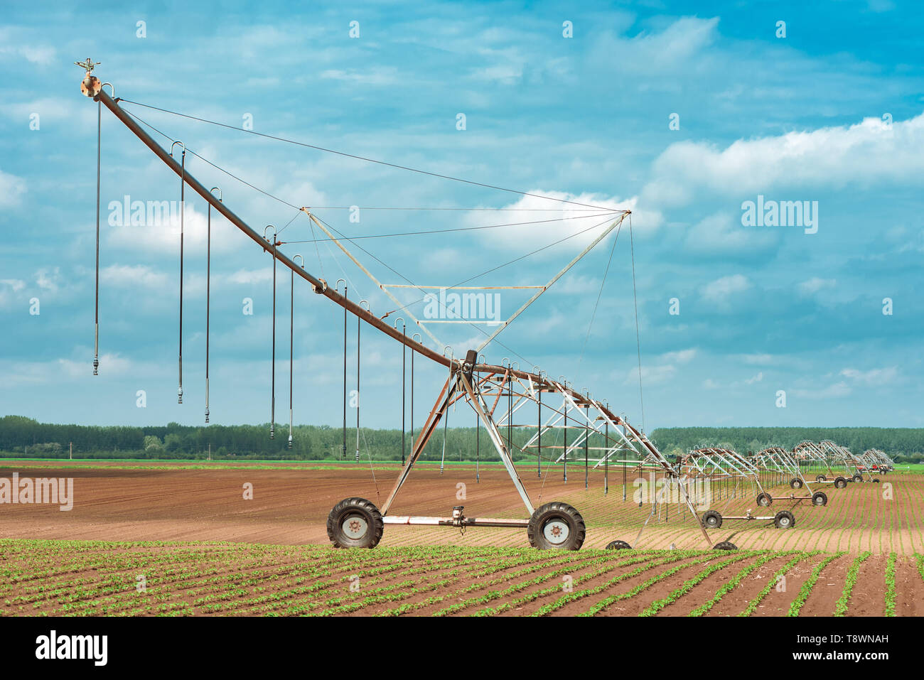 Pivot irrigation system in cultivated soybean and corn field, agricultural equipment for watering crops - Stock Image