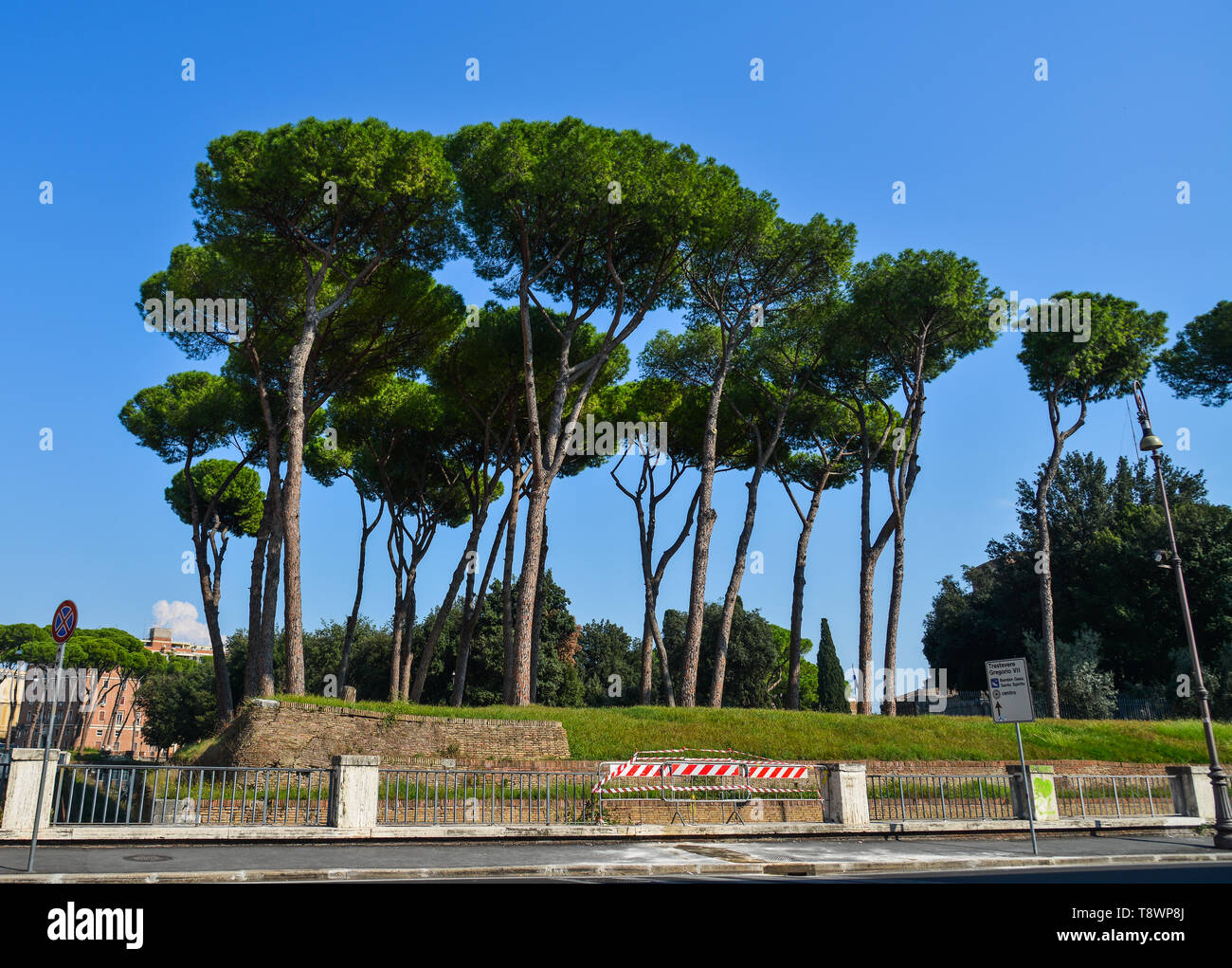 Rome, Italy - Oct 14, 2018. Italian Stone Pines (Pinus Pinea) with ancient buildings at sunny day in Rome, Italy. - Stock Image