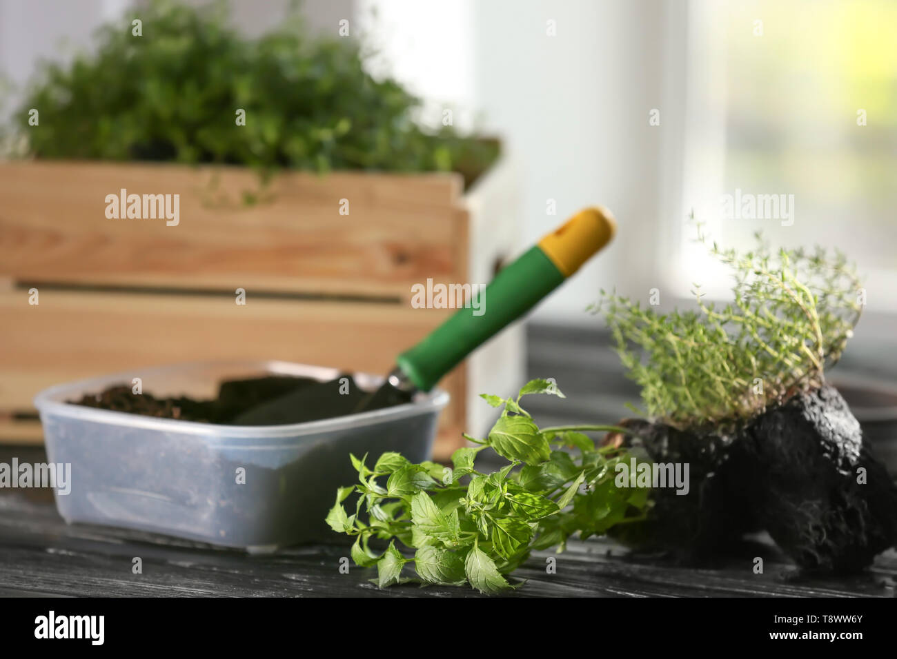Plastic container with soil and fresh herbs on wooden table - Stock Image