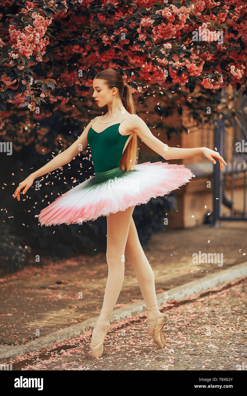 Ballerina dancing in a beautiful tutu against the background of flowering sakura trees and falling petals in the park alley. - Stock Image