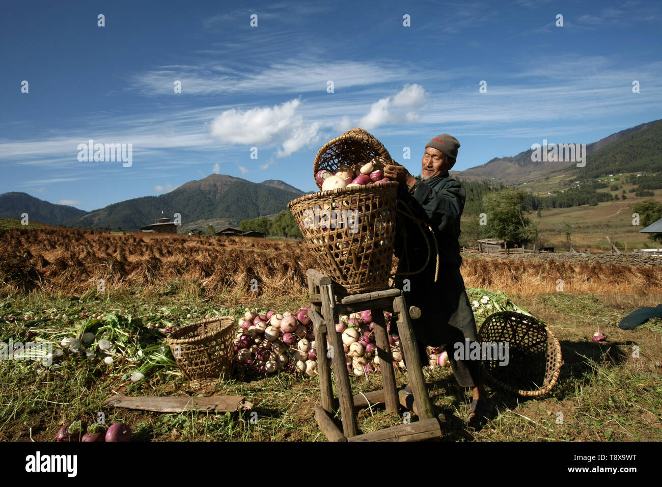 (190515) -- BEIJING, May 15,2019 (Xinhua) -- Photo taken by Sangay Tenzin shows a farmer pouring radishes into a basket in Bhutan. This photo is displayed in a photographic exhibition themed 'Diversity of Asian Civilizations in Youth Eyes'. Sangay Tenzin, a Bhutanese student of Beijing Language and Culture University, is one of the photographers whose work was accepted by an exhibition themed 'Diversity of Asian Civilizations in Youth Eyes', on the sidelines of the Conference on Dialogue of Asian Civilizations (CDAC). In his photo, a farmer pours radishes into a basket with traditional Bhutane - Stock Image