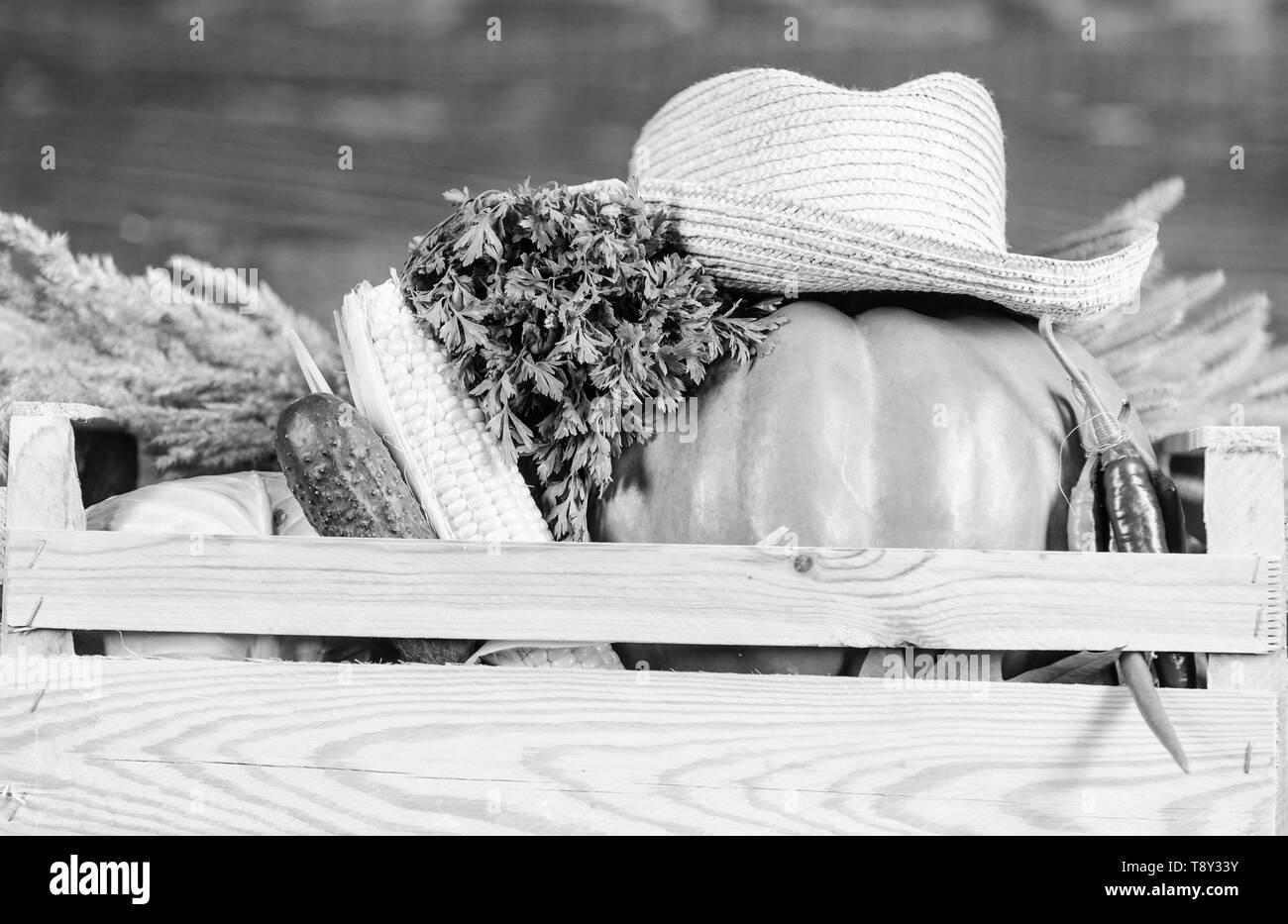 Buy fresh homegrown vegetables. Box or basket harvest vegetables wooden background. Excellent quality vegetables. Just from garden. Grocery shop concept. Delivery service fresh vegetables from farm. - Stock Image