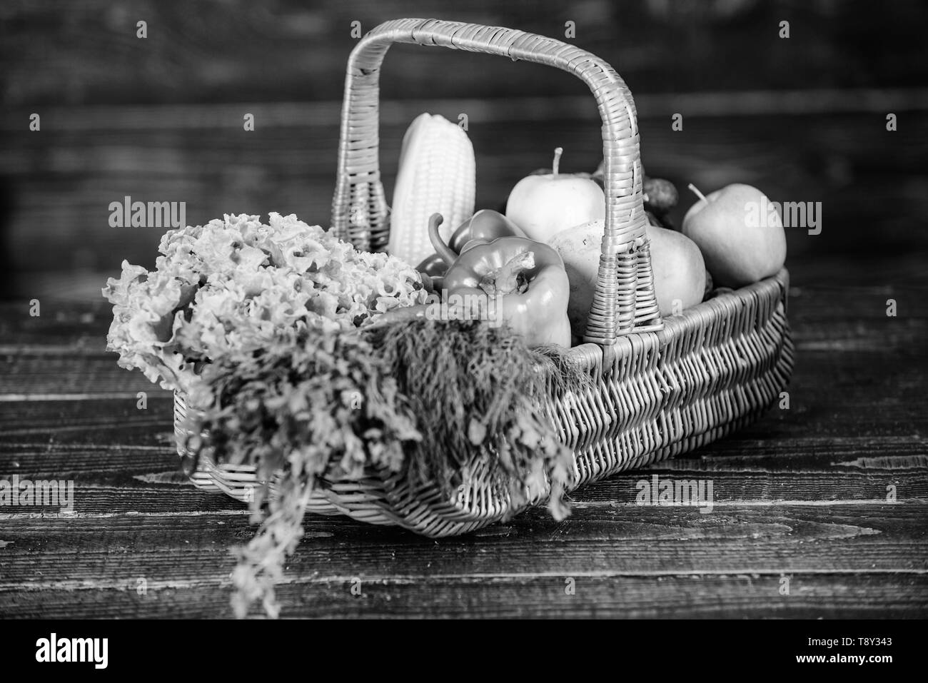 Homegrown vegetables. Fresh organic vegetables wicker basket. Fall harvest concept. Autumn harvest crops vegetables. Locally grown natural food. Farmers market. Vibrant and colorful vegetables. - Stock Image