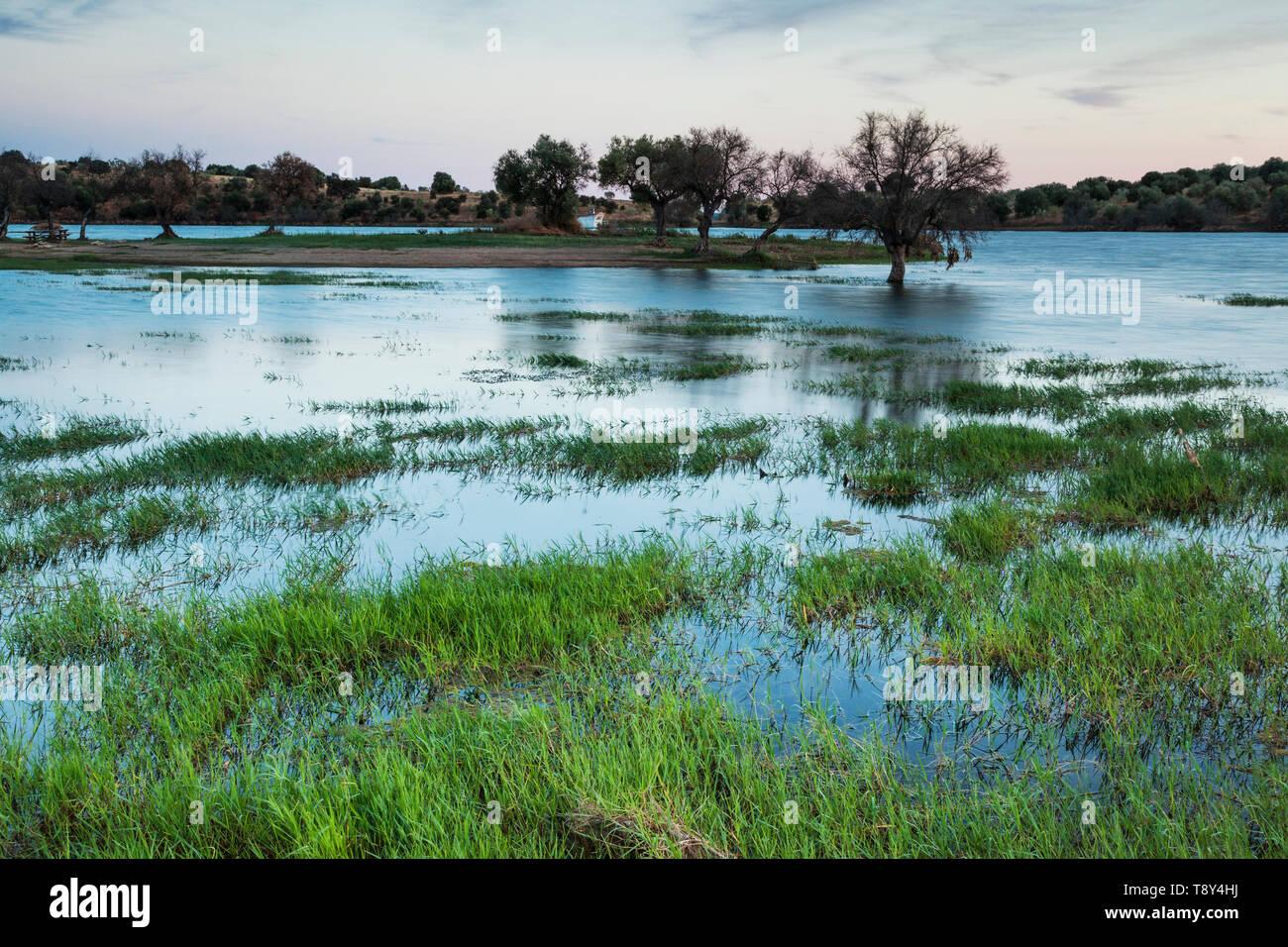 Flooded grassland near Monsaraz, Portugal - Stock Image