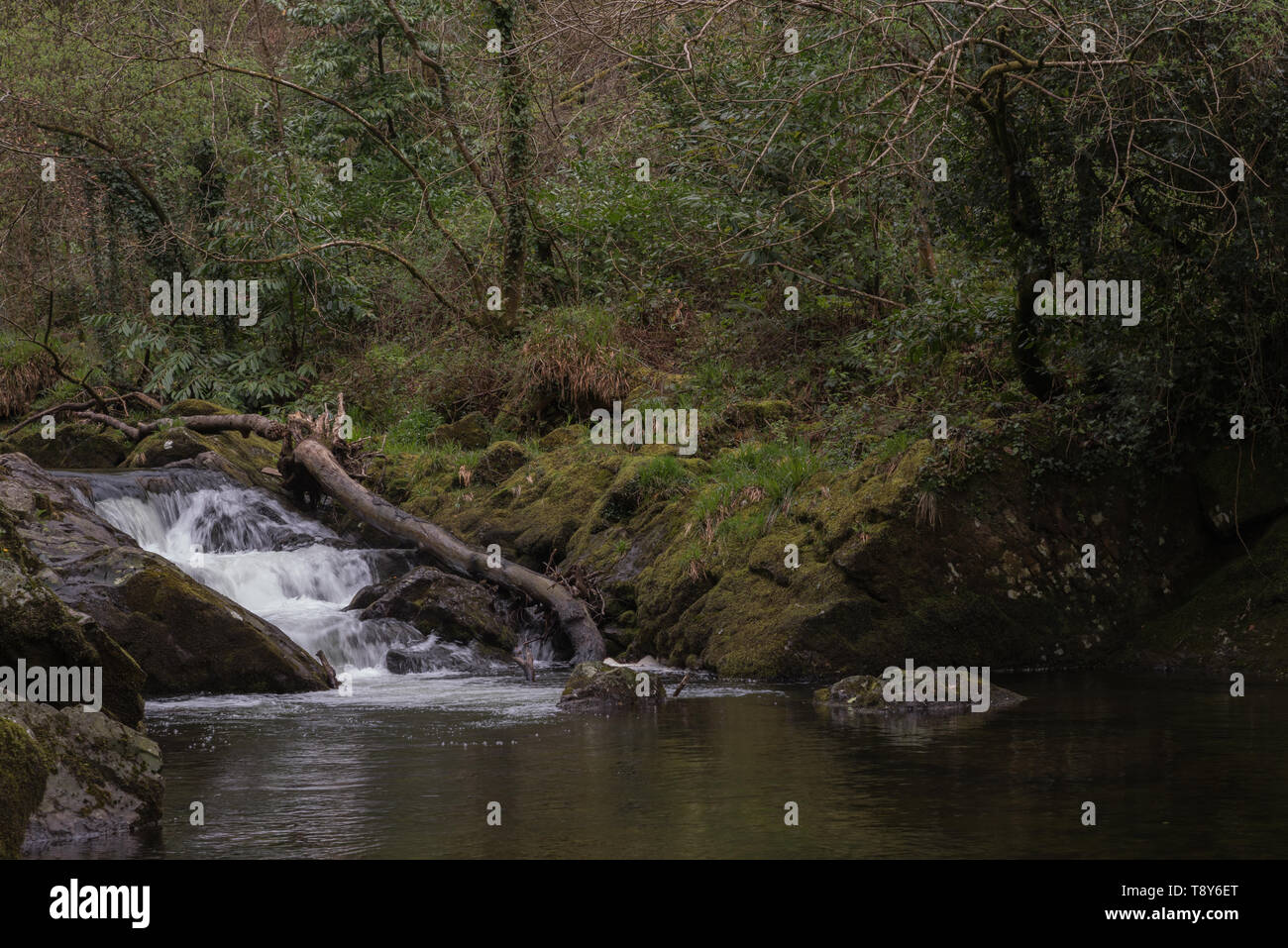 River Erme in Longtimber Woods - Stock Image