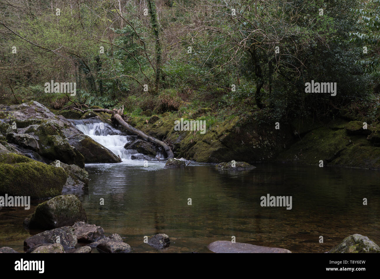 River Erme in Longtimber Woods, Ivybridge - Stock Image