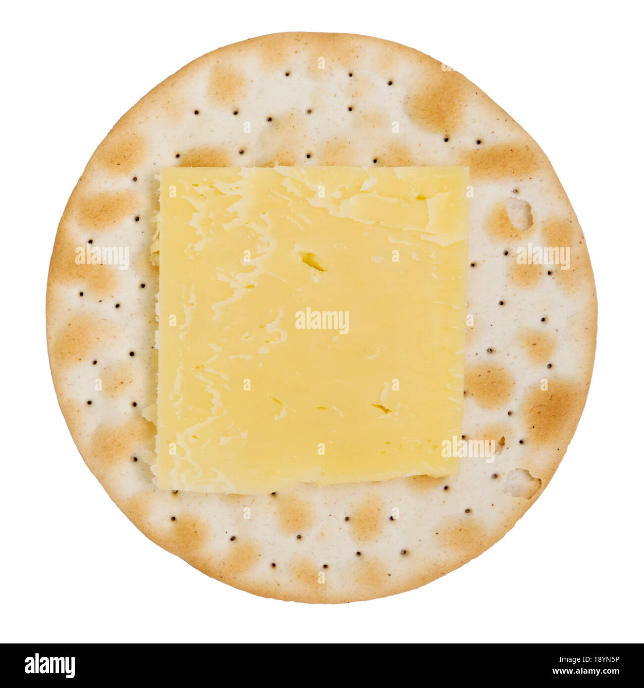 Cheddar cheese on a round cracker or biscuit, UK. Carrs table water biscuit shot from above and cut out or isolated on a white background. - Stock Image