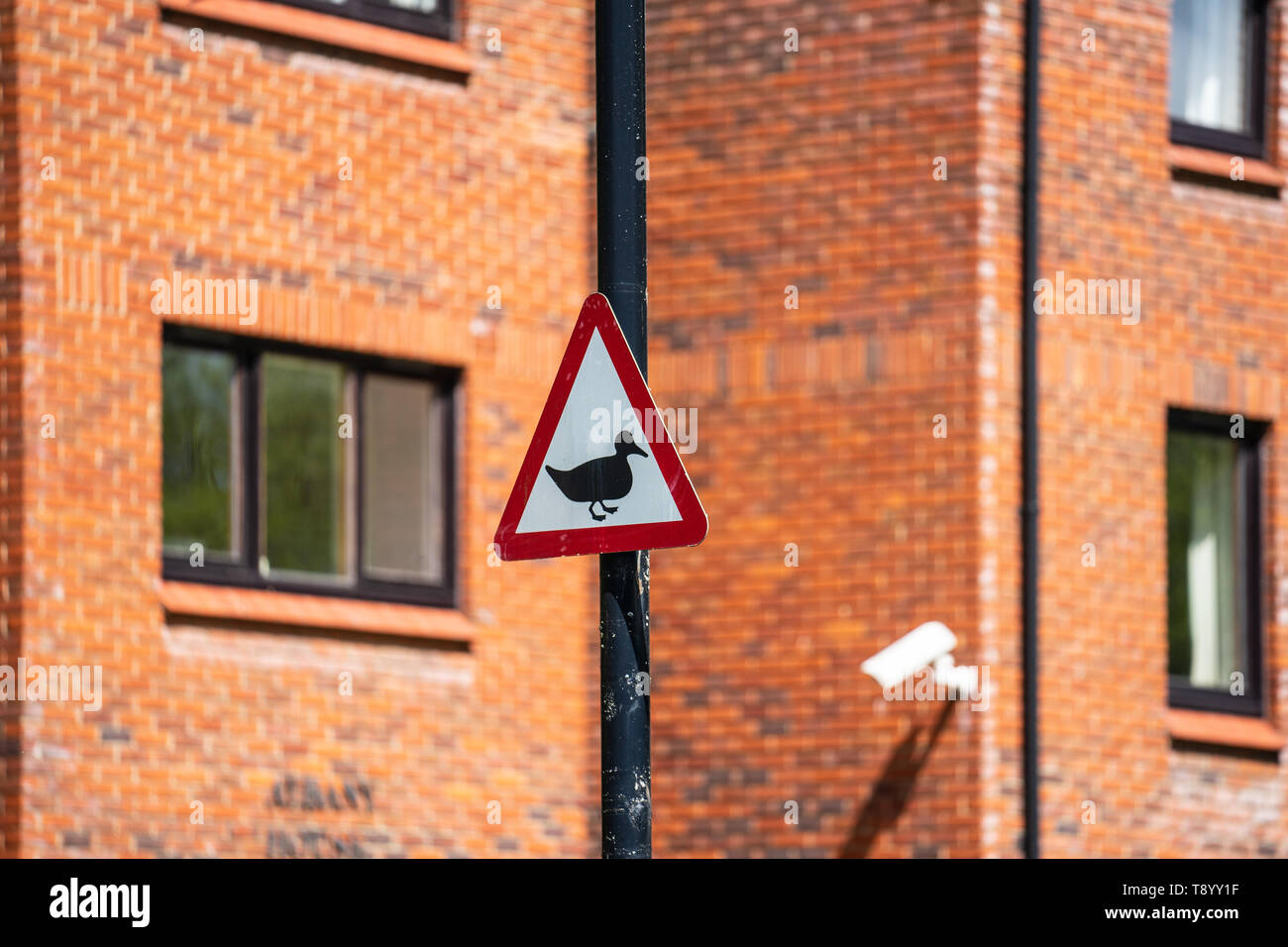 Caution Ducks Crossing Uk Road Traffic Sign. - Stock Image