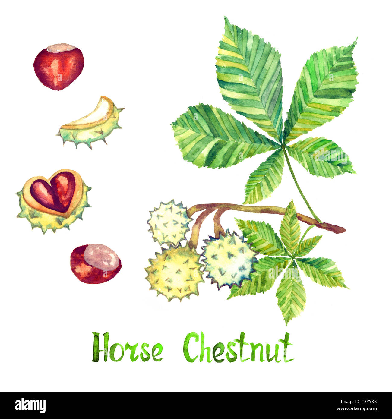 Horse Chestnut Leaves Seamless Texture Stock Vector - Illustration of  nature, repeating: 40645783