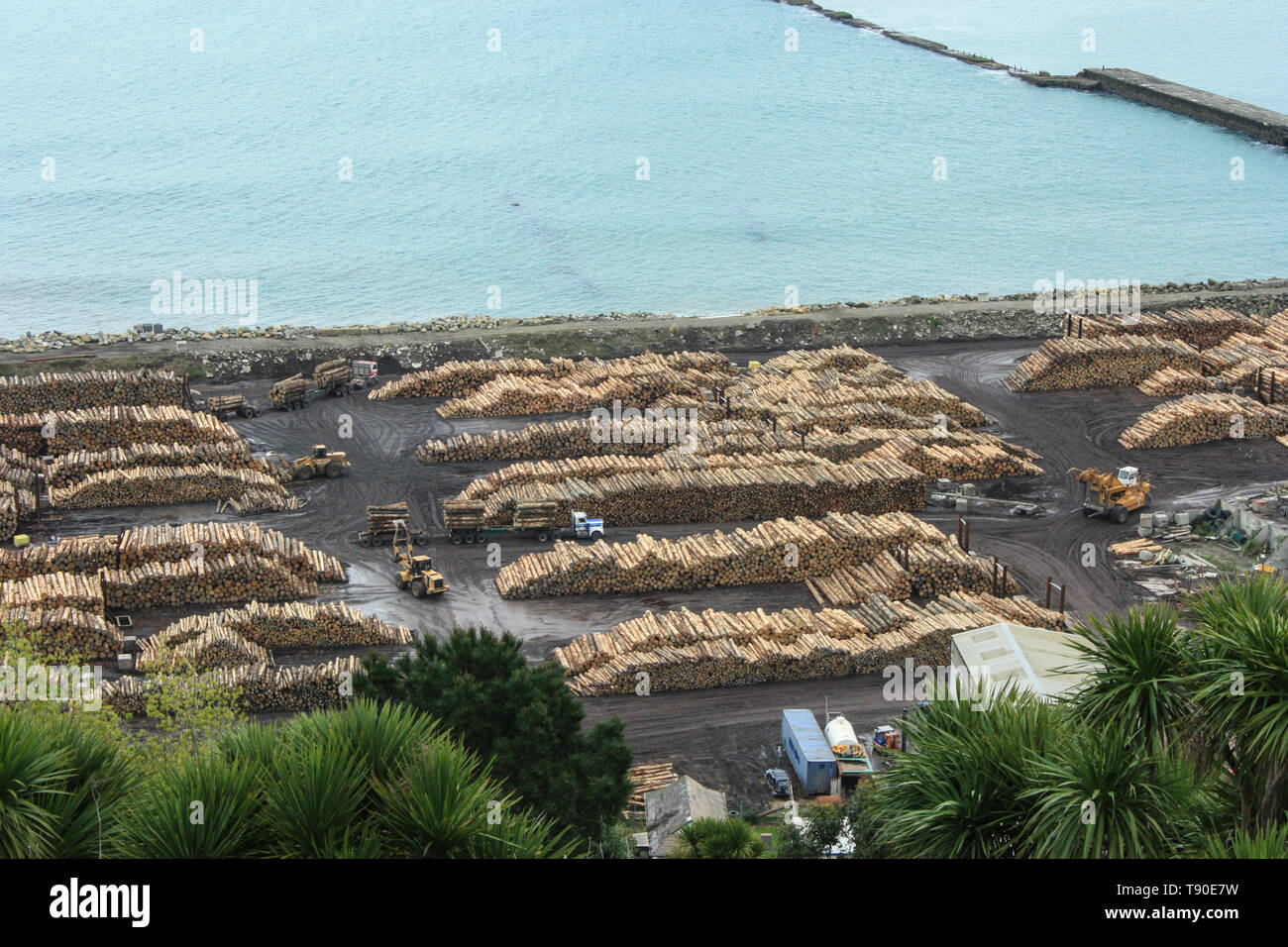Piles of logs from New Zealand's timber industry ready to be exported from the Port of Napier, New Zealand - Stock Image