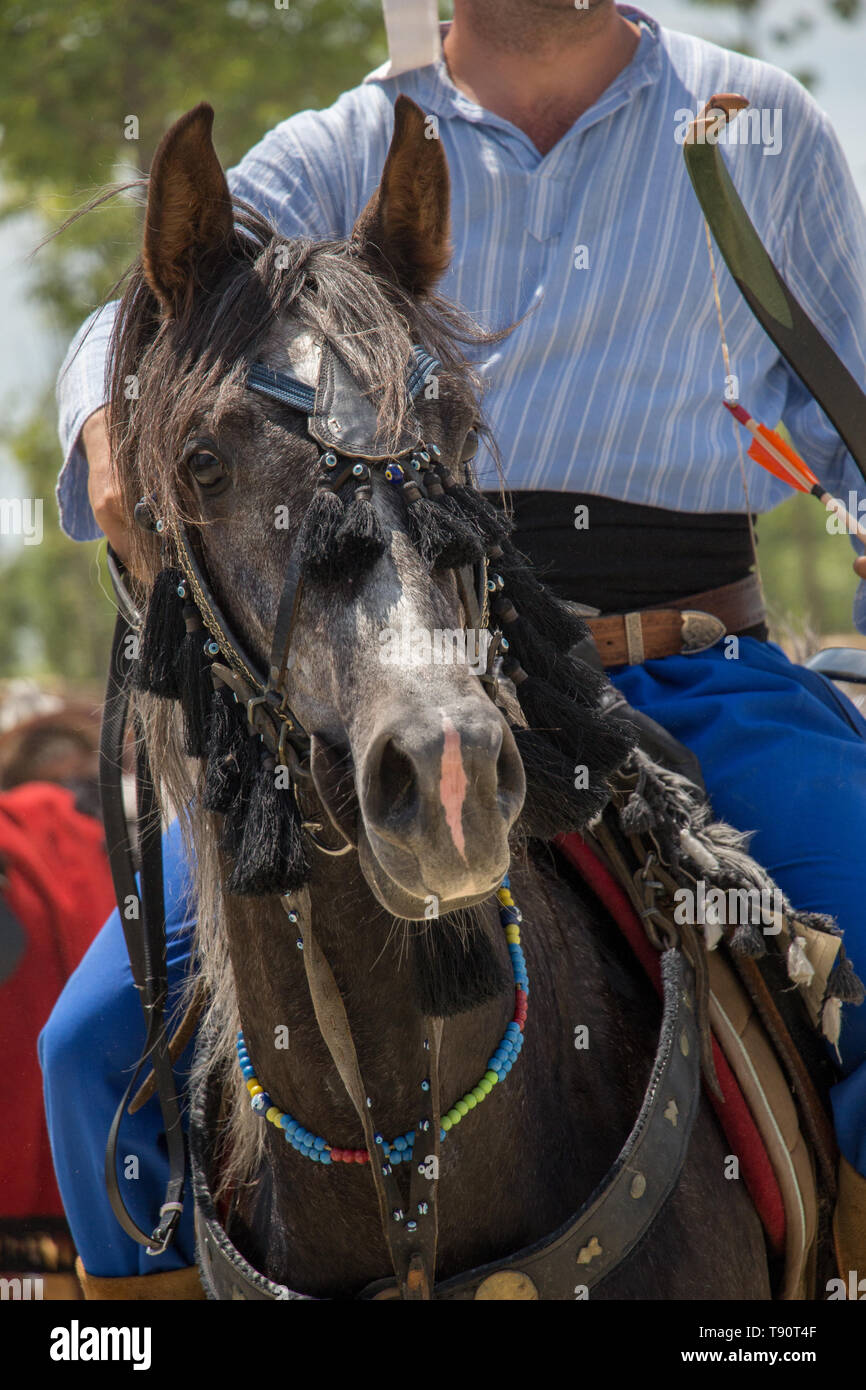 Portrait of a horse head with long mane and partial harness - Stock Image