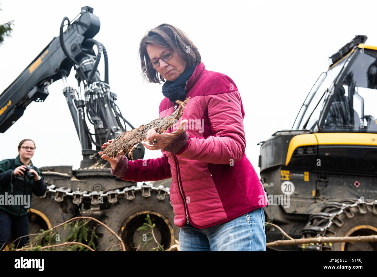 Sankt Ottilien, Germany. 16th May, 2019. Priska Hinz (Bündnis 90/Die Grünen), Minister of the Environment of Hesse, holds a piece of spruce bark in front of a harvester (wood harvester) during a visit to a forest area in the Söhrewald which has been severely affected by the windthrow. After the drought of 2018, trees are weakened and susceptible to bark beetle infestation. Credit: Swen Pförtner/dpa/Alamy Live News - Stock Image