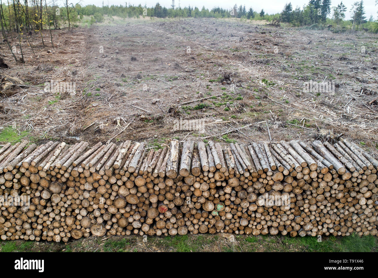 Sankt Ottilien, Germany. 16th May, 2019. Spruce trunks are lined up in front of a forest area in the Söhrewald affected by the windthrow. After the drought of 2018, trees are weakened and susceptible to bark beetle infestation. Credit: Swen Pförtner/dpa/Alamy Live News - Stock Image