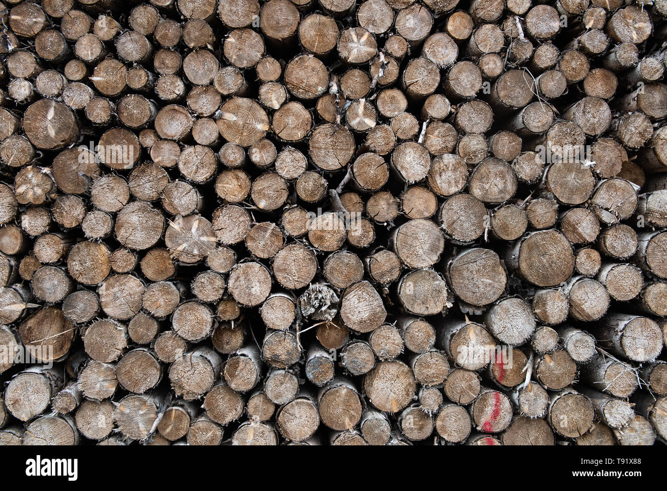 Sankt Ottilien, Germany. 16th May, 2019. Spruce logs are lined up along the edge of a forest area in the Söhrewald that has been severely affected by the windthrow. After the drought of 2018, trees are weakened and susceptible to bark beetle infestation. Credit: Swen Pförtner/dpa/Alamy Live News - Stock Image