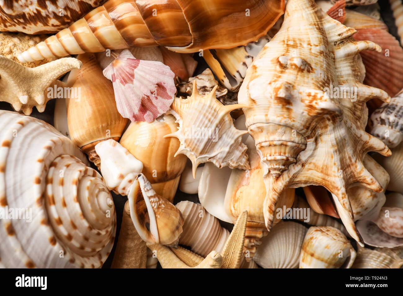 Different sea shells as background - Stock Image