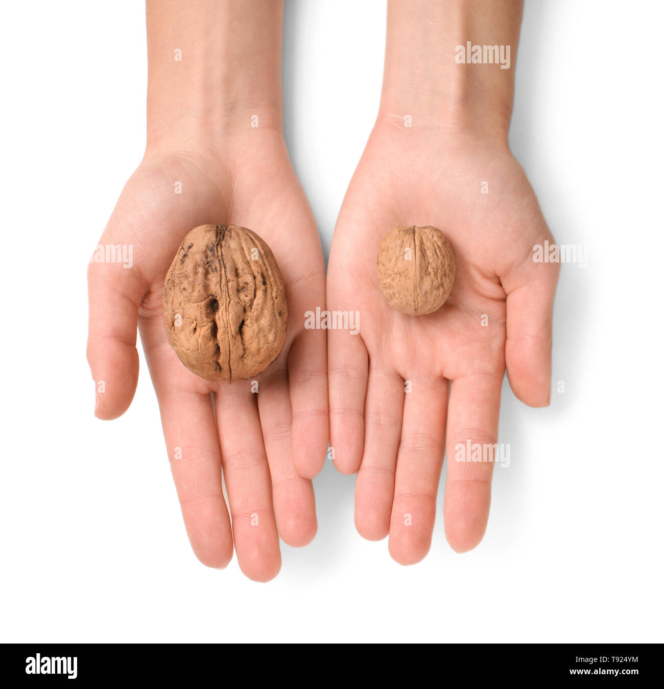 Female hands with unpeeled walnuts on white background - Stock Image