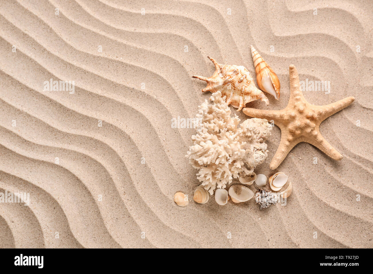 Different sea shells and starfish on sand - Stock Image