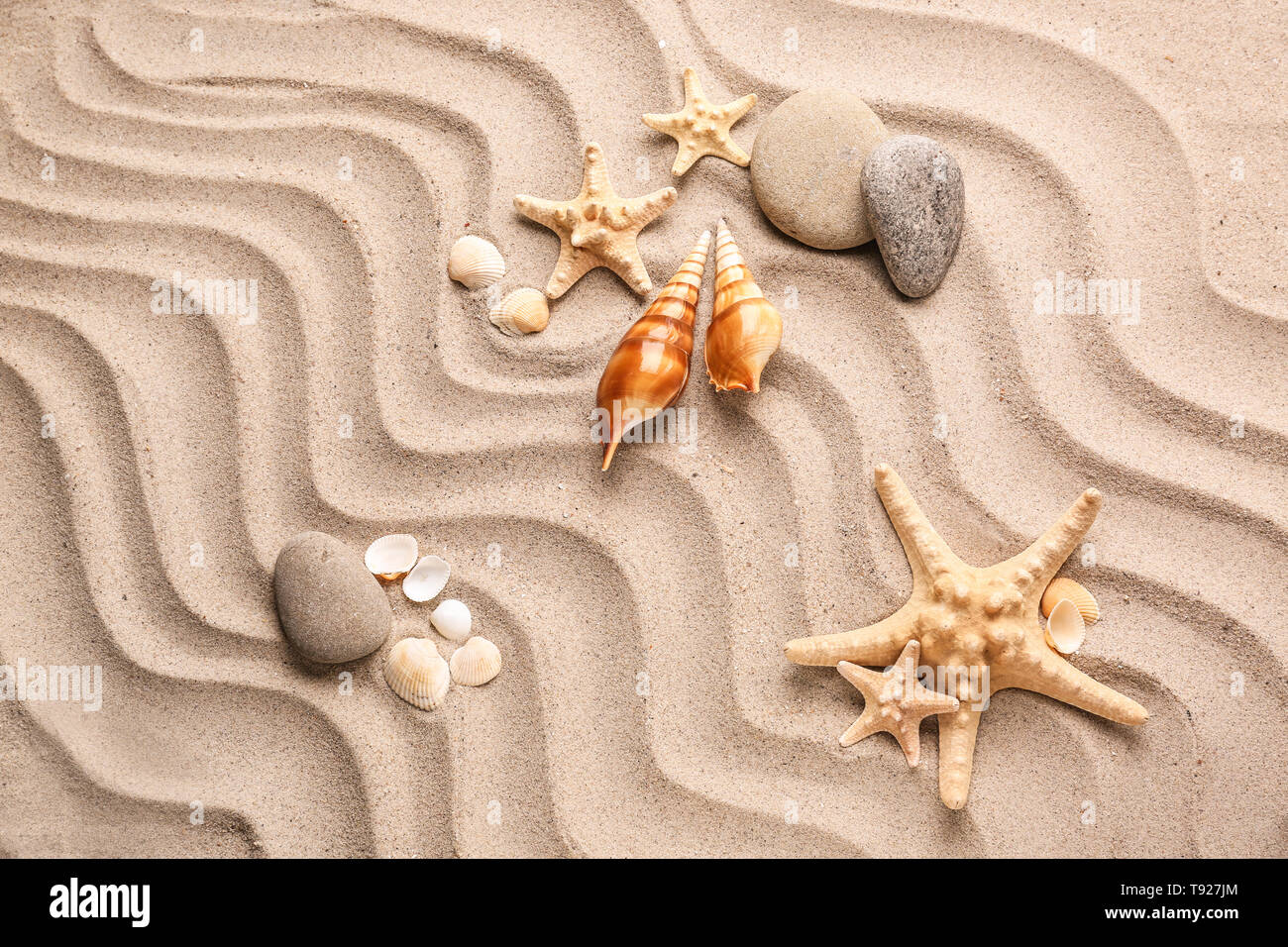 Different sea shells with starfishes and stones on sand - Stock Image