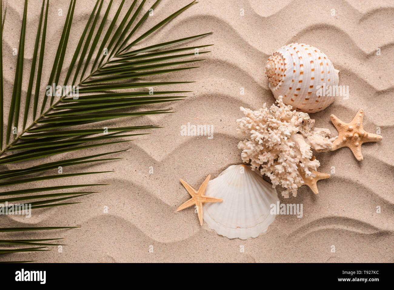 Sea shells with starfishes and tropical leaf on sand - Stock Image