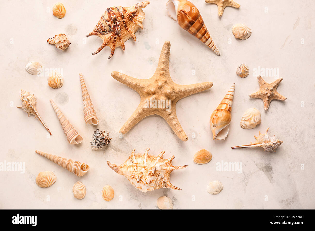 Different sea shells with starfishes on light background - Stock Image