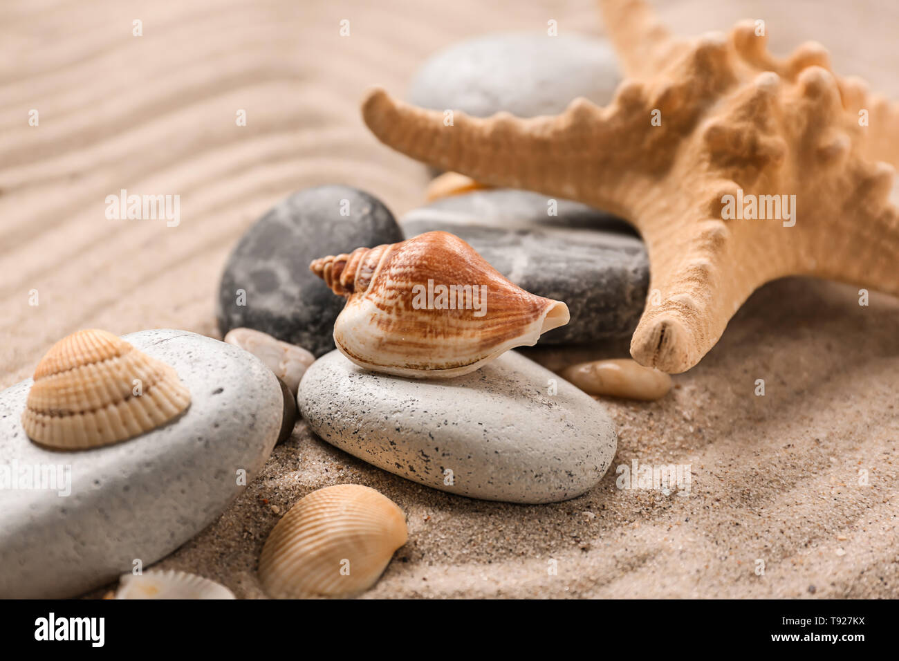 Different sea shells with stones and starfish on sand - Stock Image