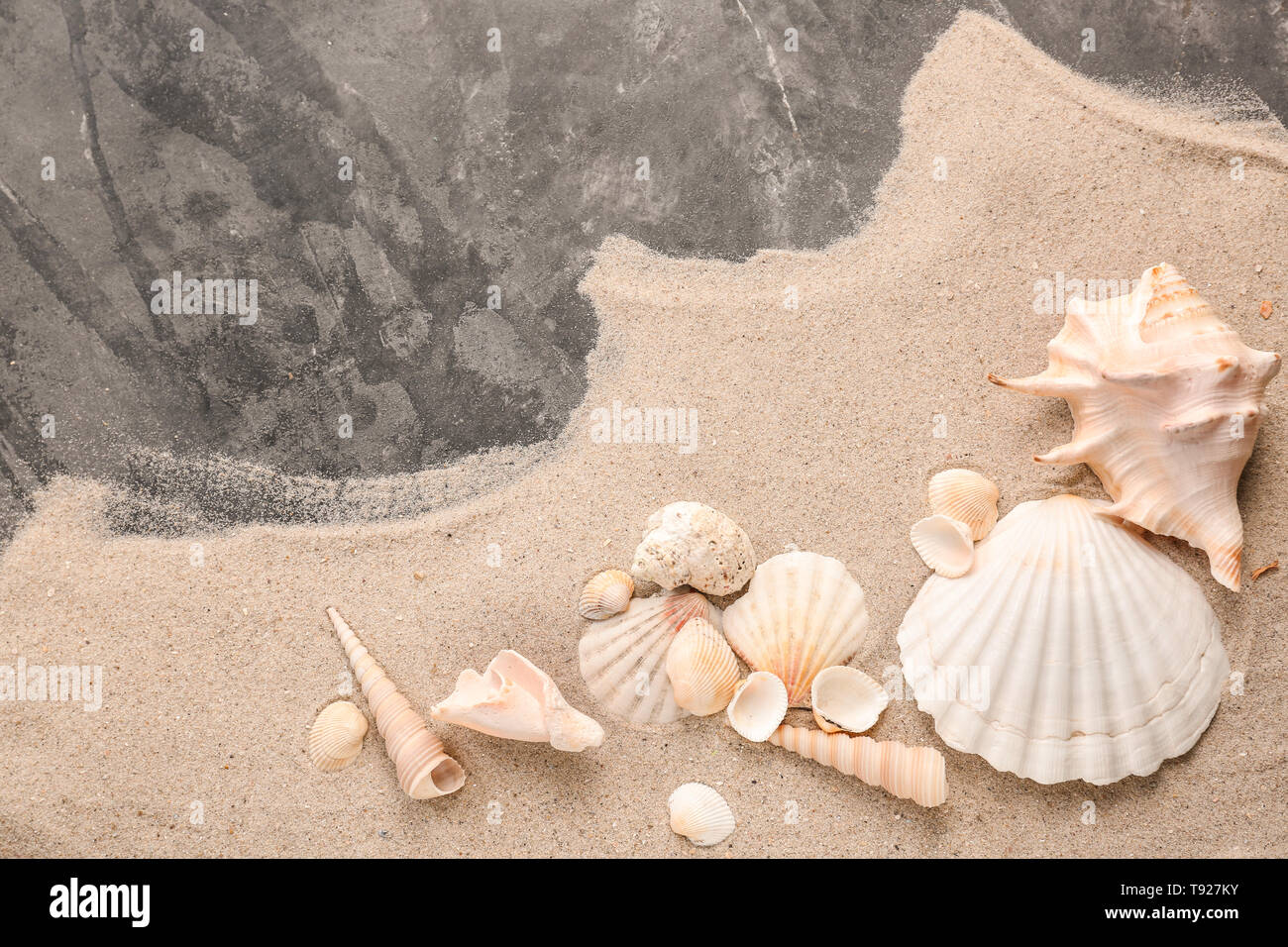 Different sea shells with sand on grey background - Stock Image