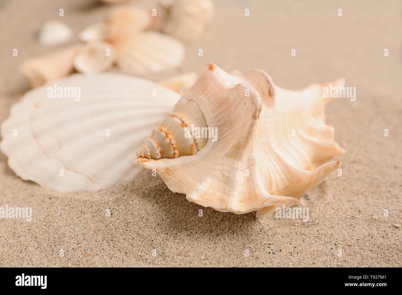 Sea shells on sand - Stock Image