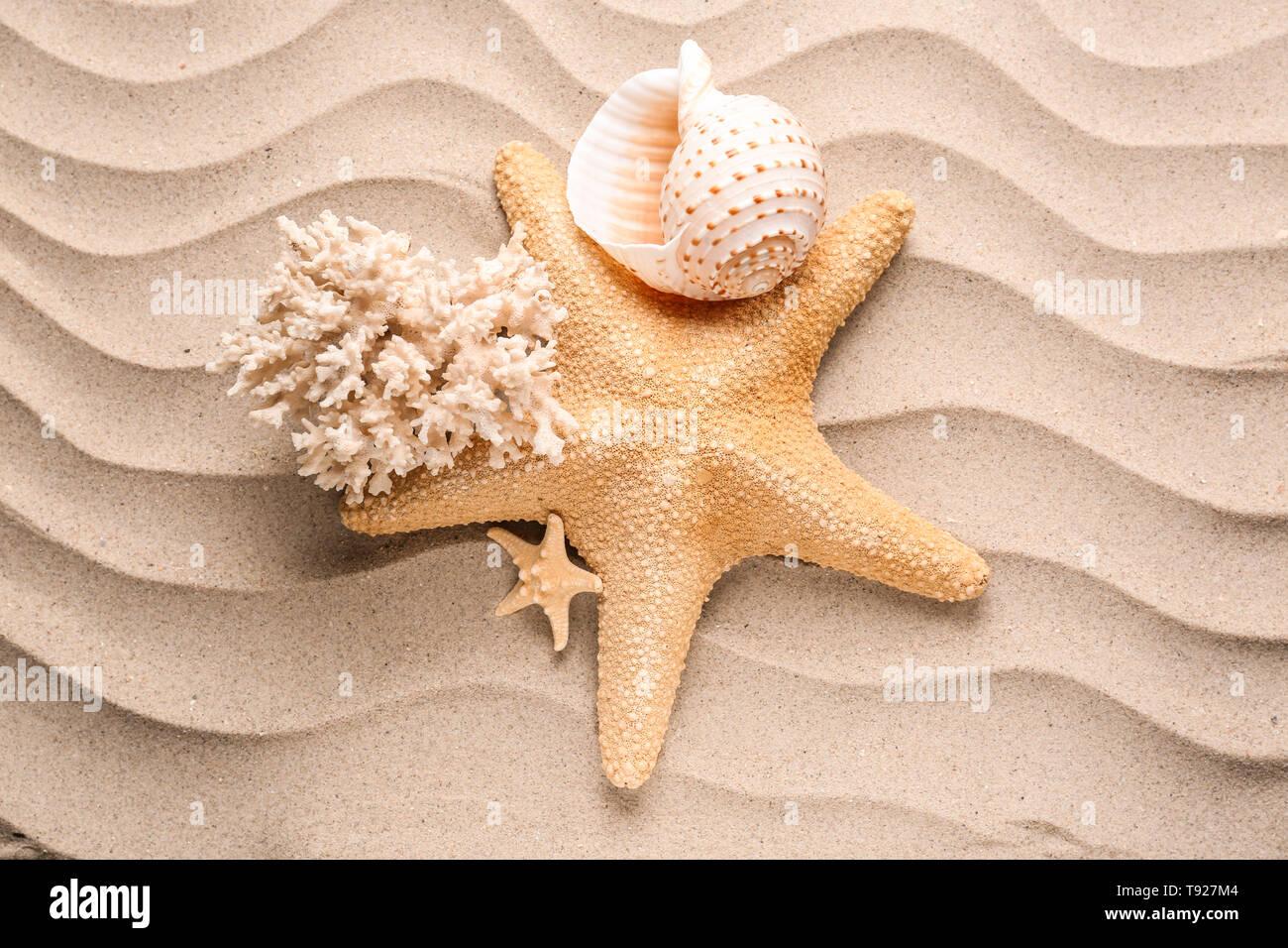 Starfish with sea shells on sand - Stock Image