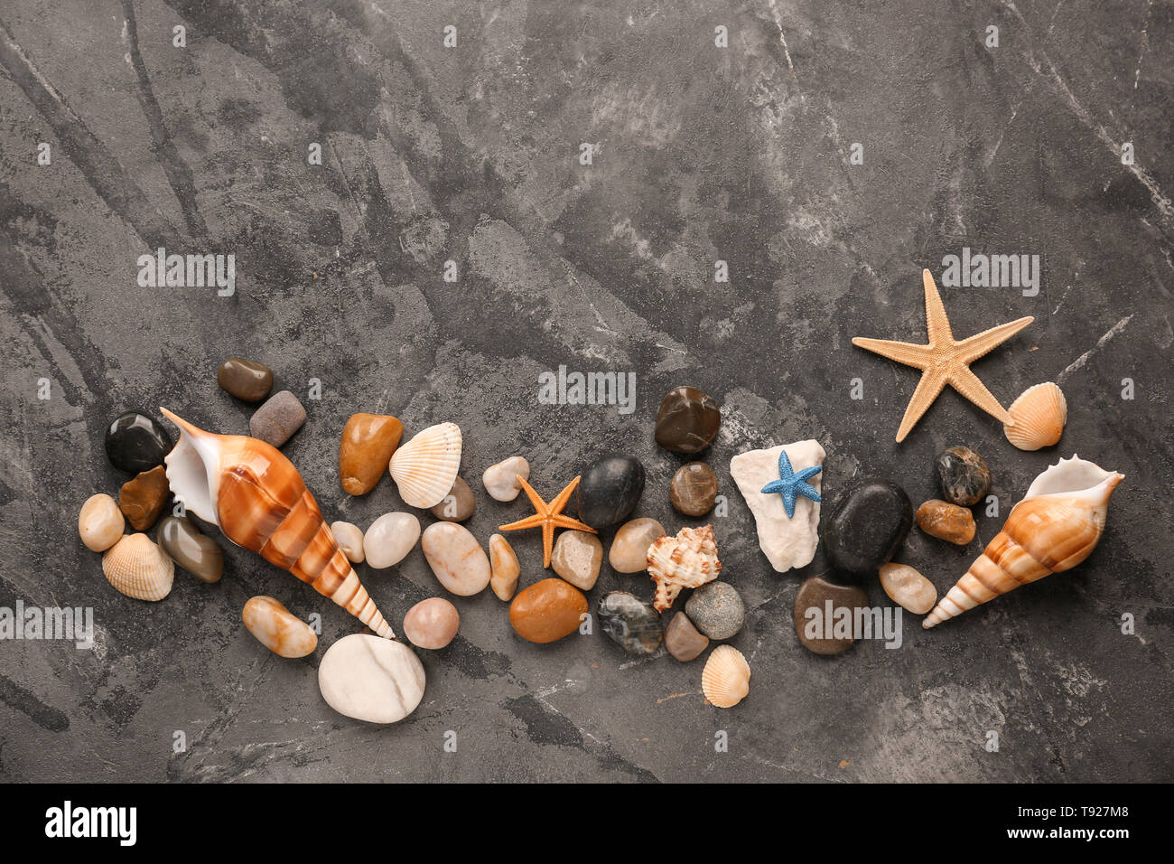 Different sea shells, starfishes and stones on grey background - Stock Image