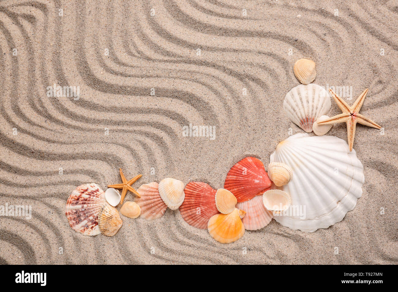 Composition with different sea shells and starfishes on sand - Stock Image
