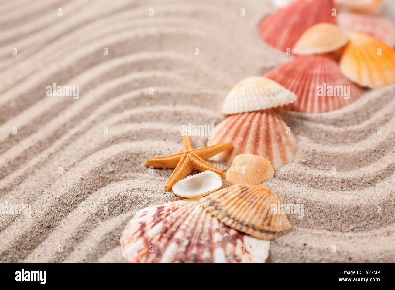 Different sea shells on sand - Stock Image