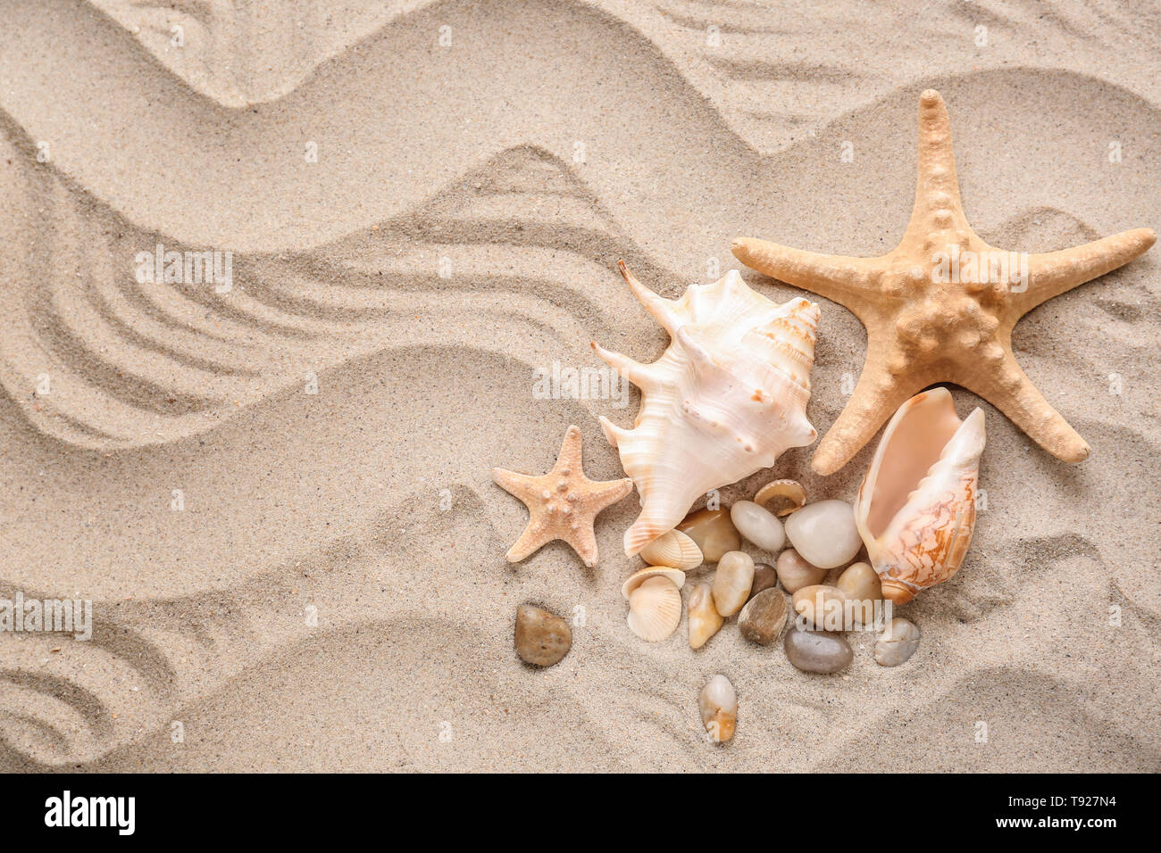 Different sea shells and starfishes on sand - Stock Image