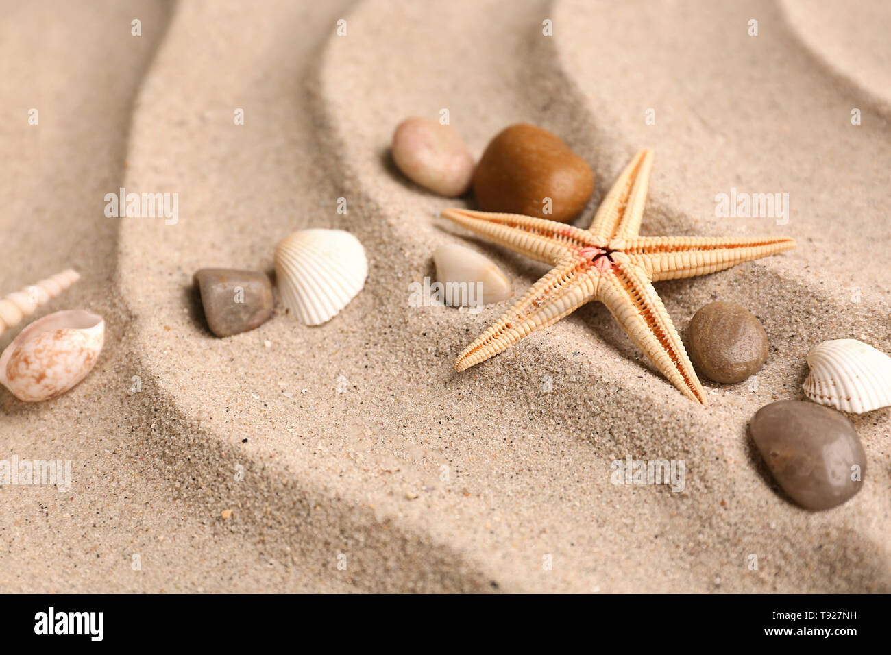 Different sea shells with starfish and stones on sand - Stock Image