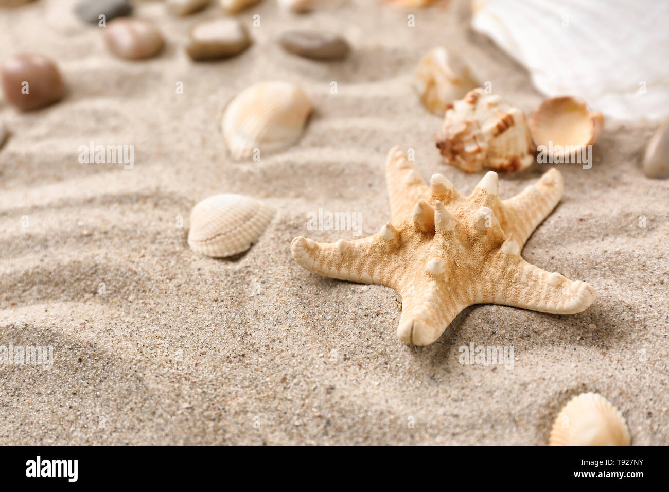 Different sea shells with starfish on sand - Stock Image