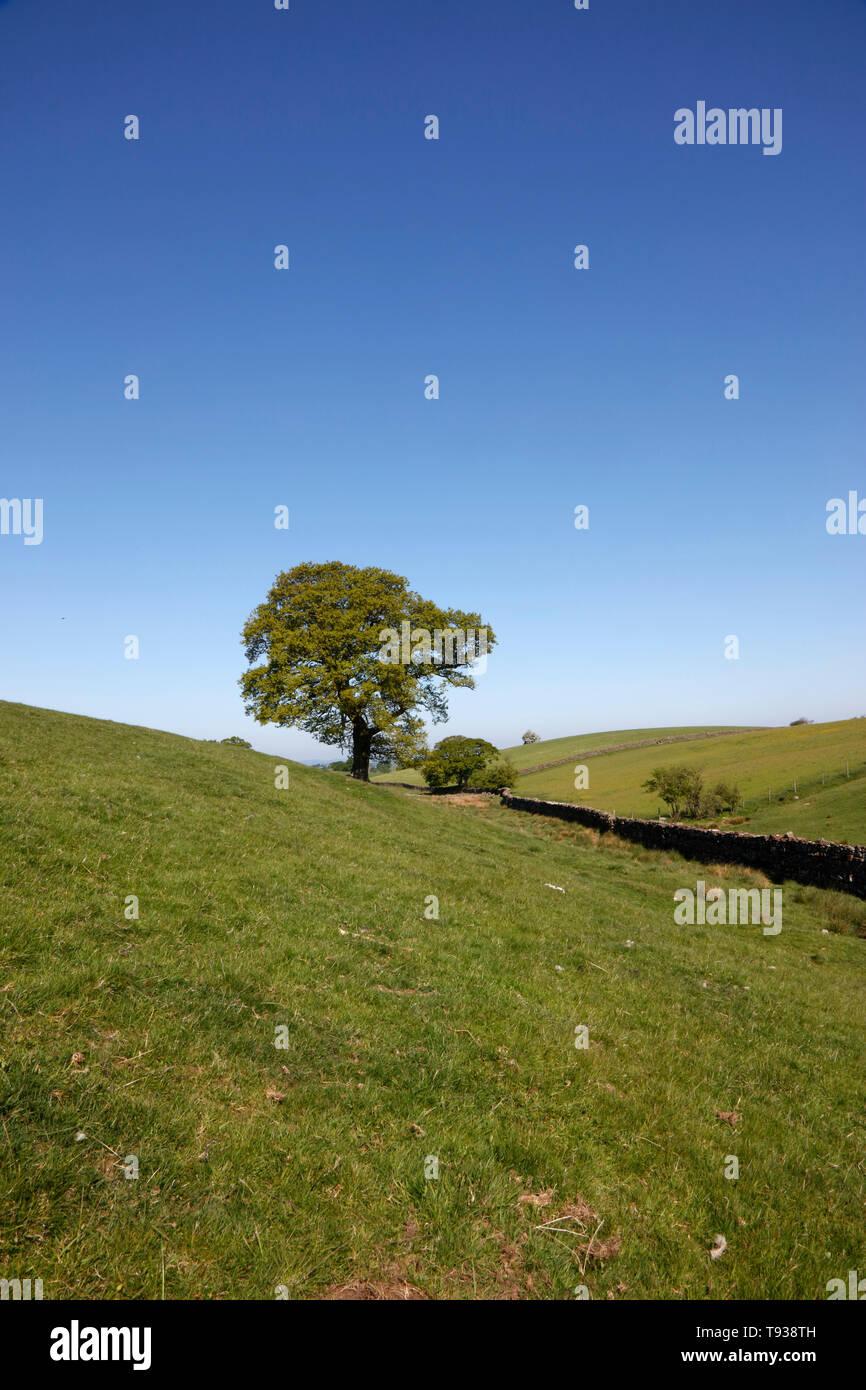 Eden Valley near Dufton, Cumbria, England, UK - Stock Image
