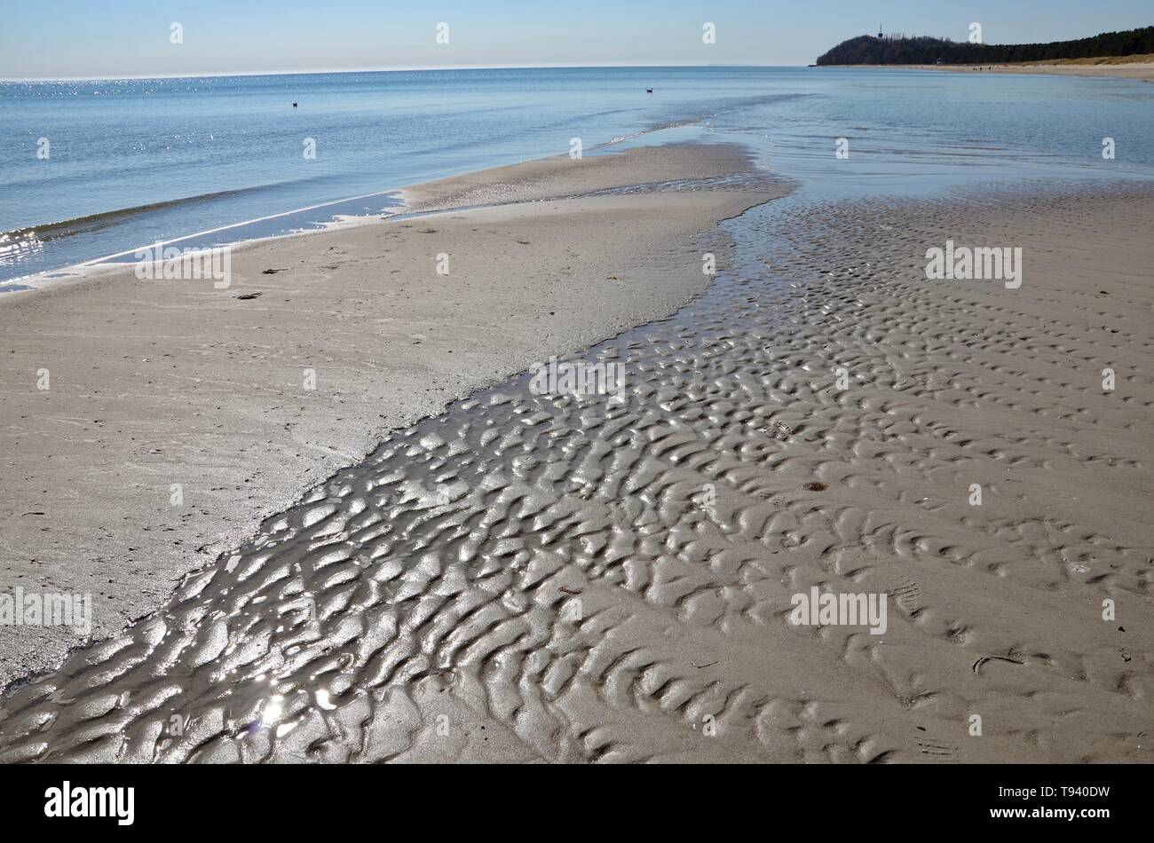 Island Ruegen in Germany, Mecklenburg Vorpommern(Mecklenburg West Pomerania),Baltic sea,the beach of the county Thiessow on peninsula Moenchgut,spring - Stock Image