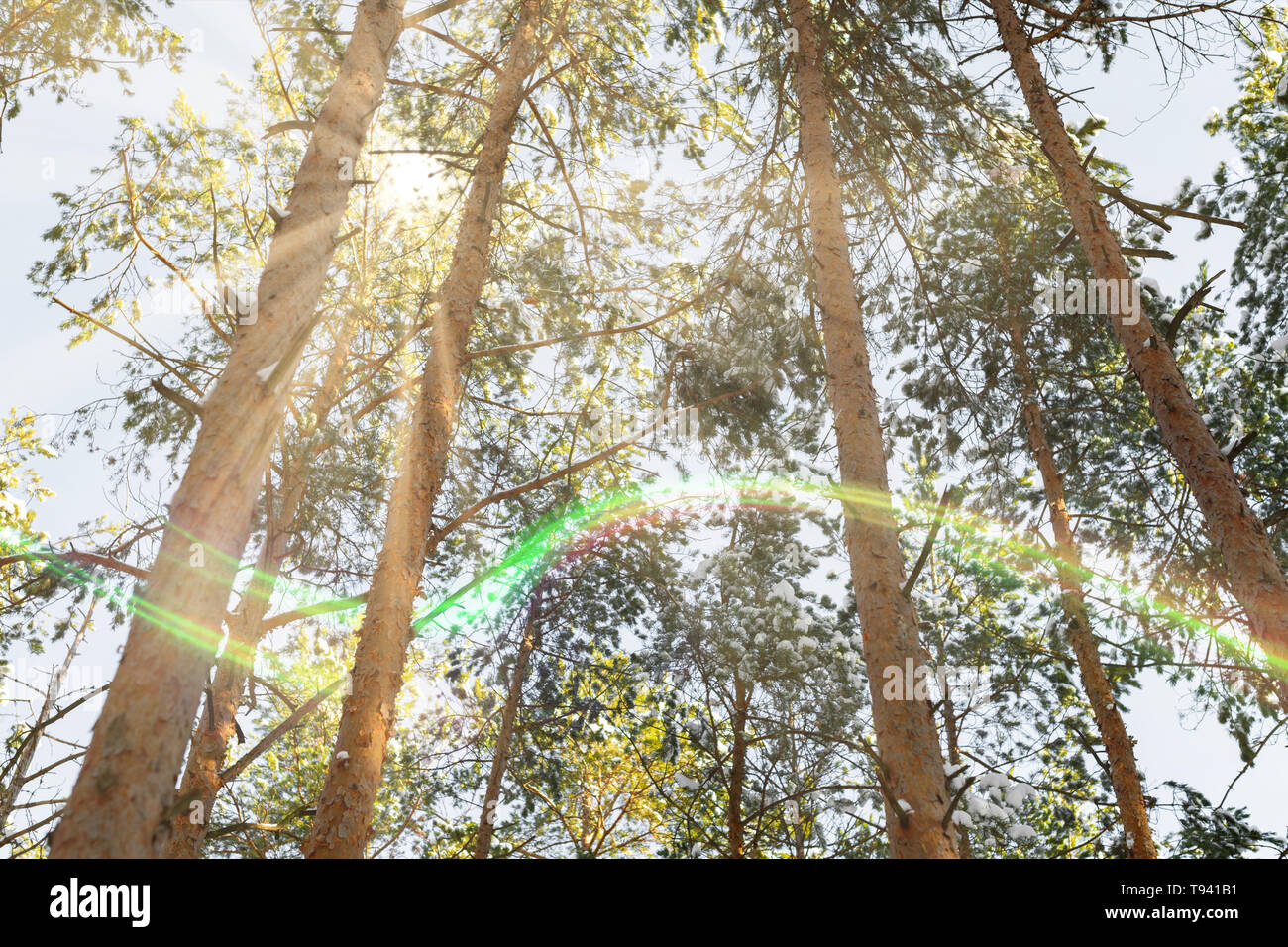 Forest lights fairytale concept. Sun lights in wild woodland. Good day for active sport and weekend with nature. - Stock Image