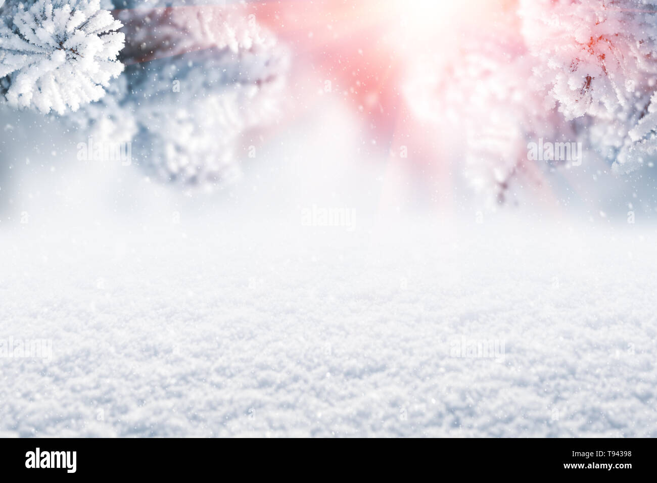 Winter Christmas scenic background. Snow landscape with spruce branches covered with snow and sunlight through the frozen tree branches. Sky and sunli - Stock Image