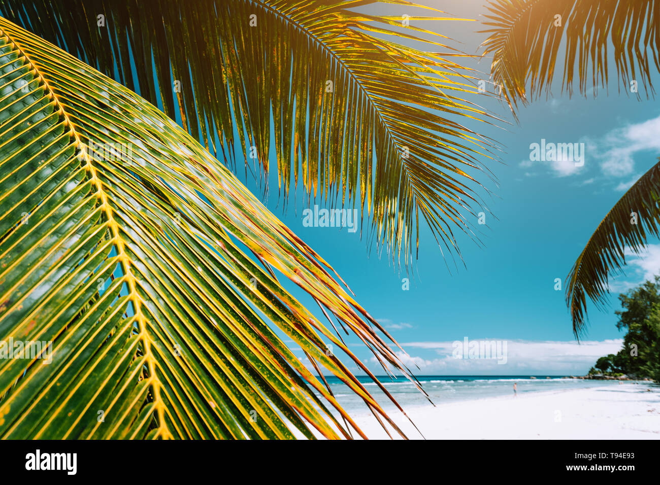 Tropical Paradise Beach Wallpapers Latest