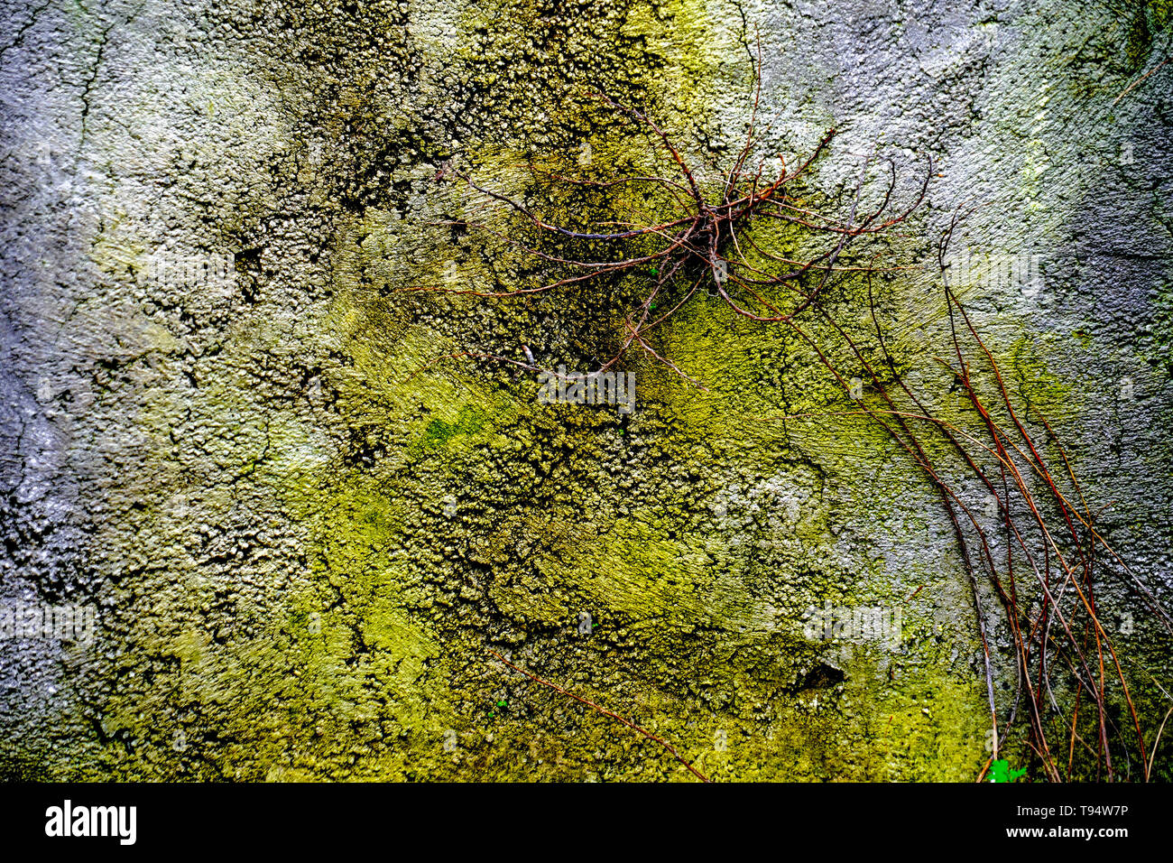 Yellow green mossy Abstract background - Stock Image