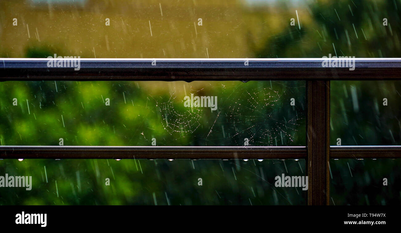 Rain drops of a spider's web - Stock Image