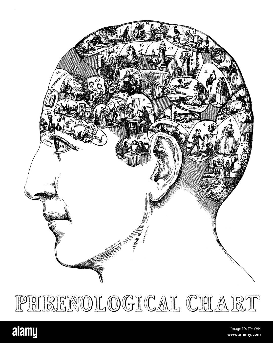 Entitled: 'Head containing over thirty images symbolizing the phrenological faculties by Drs. Gall & Spurzheim.' Phrenology is a pseudoscience primarily focused on measurements of the human skull, based on the concept that the brain is the organ of the mind, and that certain brain areas have localized, specific functions or modules. Although both of those ideas have a basis in reality, phrenology extrapolated beyond empirical knowledge in a way that departed from science. - Stock Image