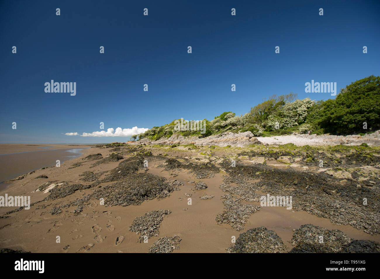 A view close to Jenny Brown's Point at low tide near the village of Silverdale close to the edge of Morecambe Bay. The bay is noted for its powerful t - Stock Image