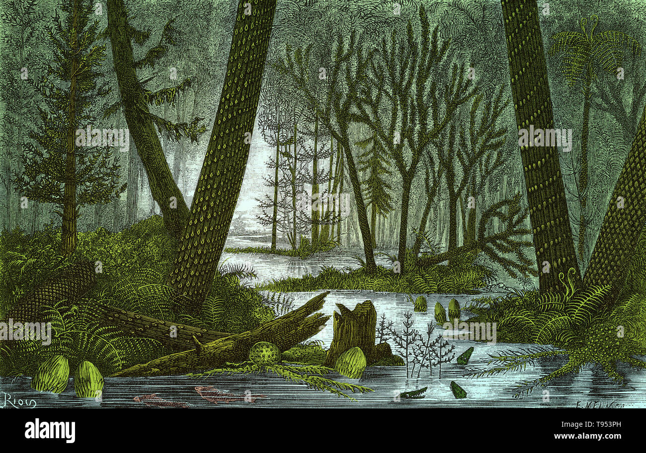 Ideal view of a marshy forest of the Coal Period, from Louis Figuier's The World Before the Deluge, 1867 American edition. On the right are Lepidodendron and Sigillaria trees, with an arborescent fern rising between them. On the left are another Sigillaria, a Sphenophyllum and a conifer. Other visible plants are Calamites, Asterophyllites and herbaceous ferns. A few fish and the primitive amphibian Archegosaurus are in the water. - Stock Image