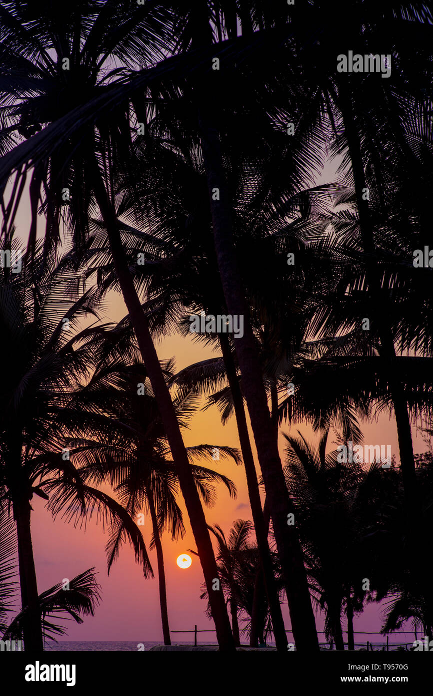 Silhouette of palm trees in front of a sunset over the ocean. Stock Photo