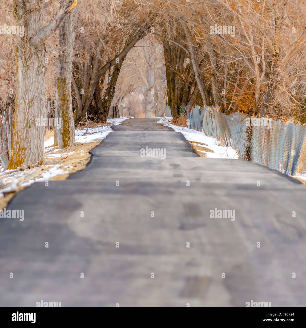 Clear Square Road under a canopy of leafless branches from the row of tall hibernating trees - Stock Image